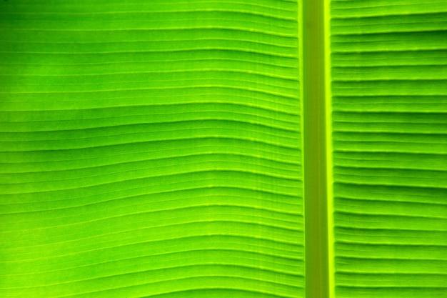 Foglia verde sfondo