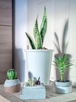 Foglia verde, cactus e piante succulente in vaso nella stanza.