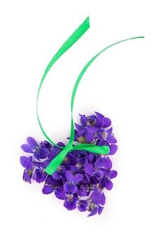 Foglia verde e fiori di legno viola viola odorata isolati su sfondo bianco.
