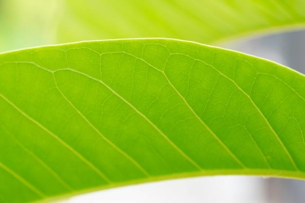 Foglia verde isolata sullo sfondo della natura.