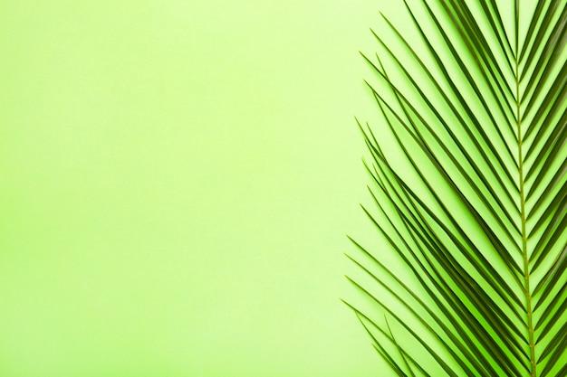 Foglia verde della palma su fondo verde con lo spazio della copia