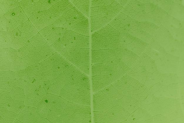 Fondale strutturato con motivo a foglia verde