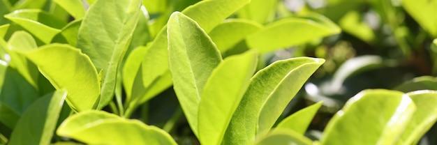 Foglia verde di superficie sullo sfondo