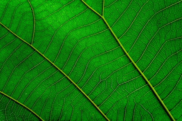 Foglia verde texture di sfondo