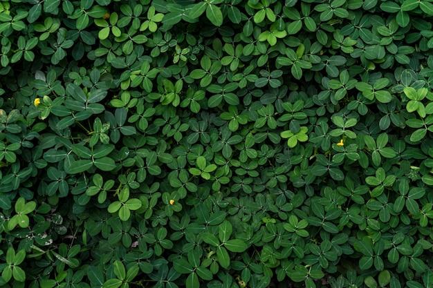 Struttura di foglia verde