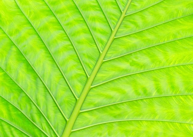 Trama di foglia verde