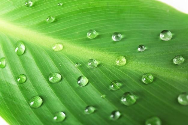 Foglia verde con goccioline, primo piano