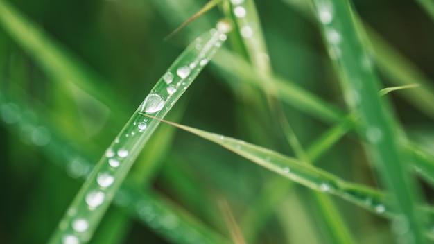 Foglia verde con goccia di pioggia