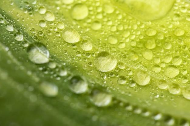 Foglia verde con gocce d'acqua, macro di gocce d'acqua sulla foglia verde
