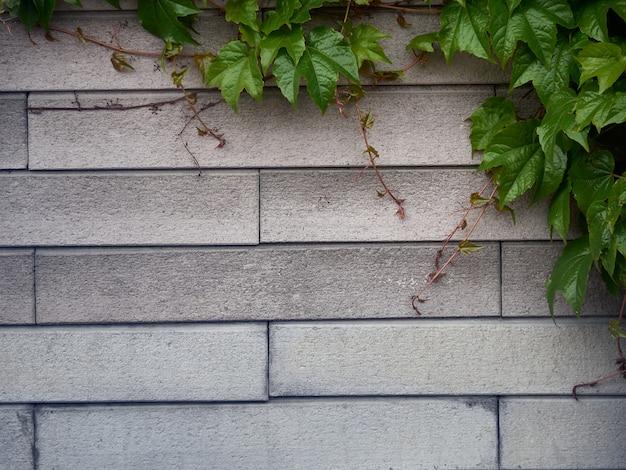 Sfondo di foglie verdi con motivo a mattoni.