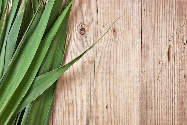 Foglie verdi sullo sfondo di una parete di legno