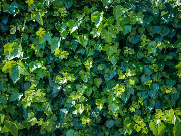 Sfondo di foglie verdi