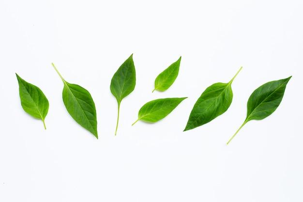 Foglie verdi di peperoncino su bianco