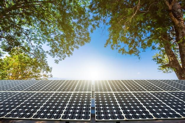 Foglie verdi cornice albero con pannello solare fotovoltaico in vista primavera cielo azzurro sfondo, verde pulito alimentazione alternativa eco concetto di energia.