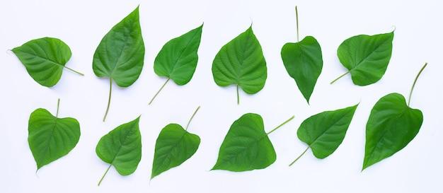 Foglie verdi a forma di cuore sulla superficie bianca
