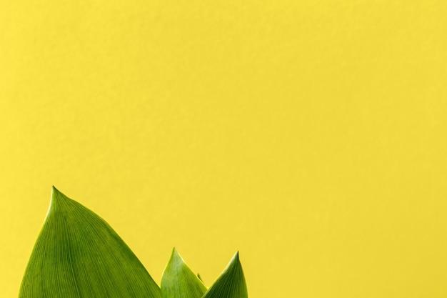 Foglie verdi di mughetto su uno sfondo giallo brillante con spazio di copia. sfondo naturale luminoso con fogliame verde. messa a fuoco selettiva
