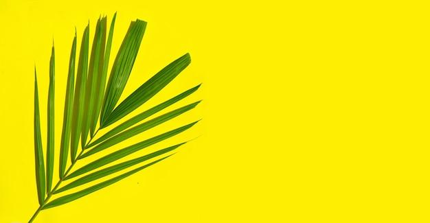Foglie verdi di palma sulla superficie gialla