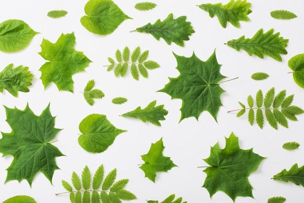 Foglie verdi su sfondo di carta