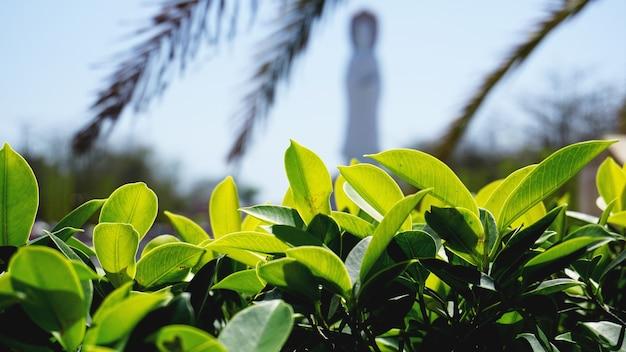 Fondo del modello delle foglie verdi, fondo naturale verde e carta da parati
