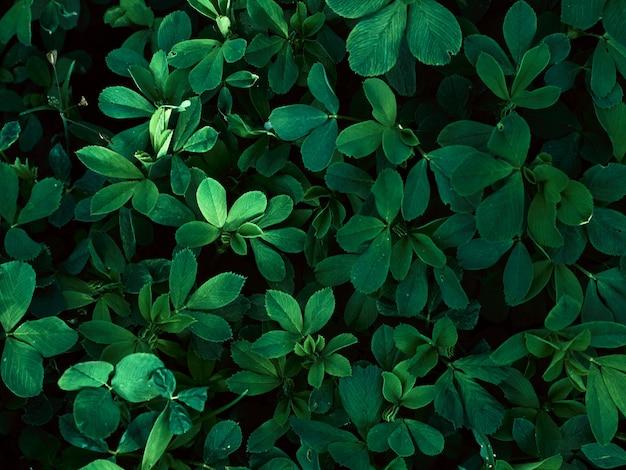 Fondo del modello delle foglie verdi. Foto Premium
