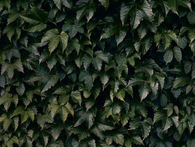 Sfondo di foglie verdi.