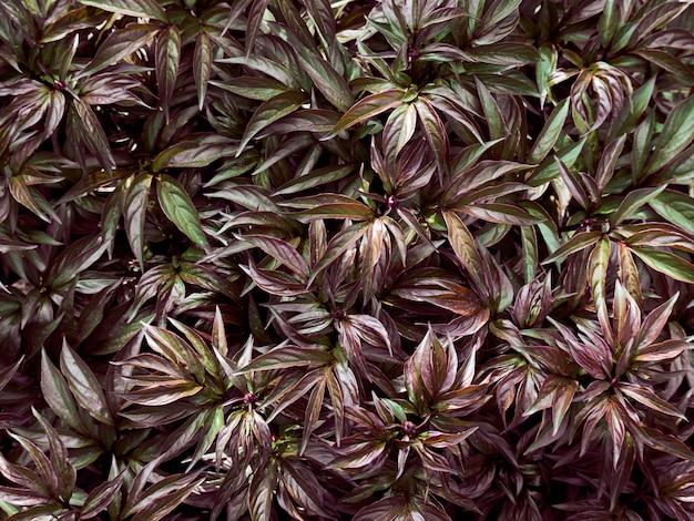 Fondo del modello delle foglie verdi.