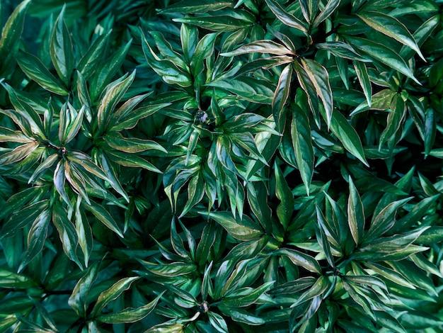 Modello di foglie verdi.