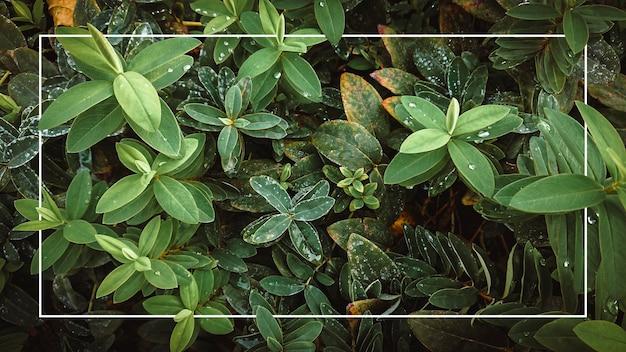 Texture di foglie verdi con una cornice bianca. sfondo