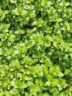 Foglie verdi parete backgroundweed plantgrass che cresce all'aperto contro il campo contro le luci incandescenti