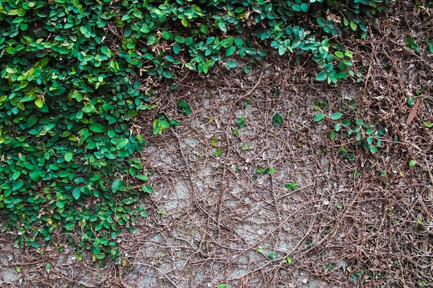 Struttura e fondo della parete delle foglie verdi.