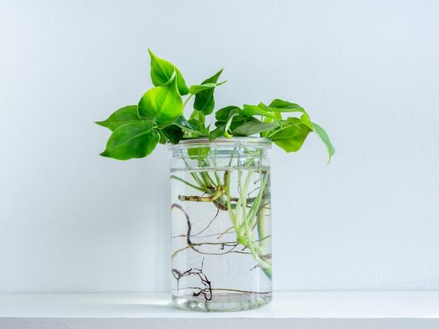 Foglie verdi con acqua in bottiglia di plastica trasparente.