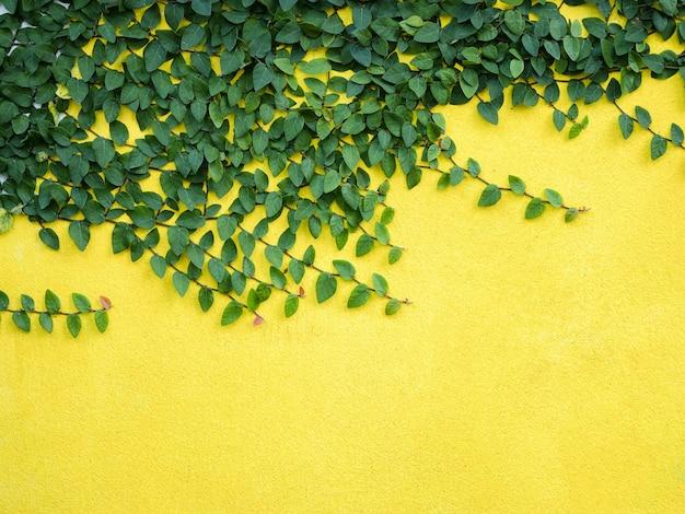 Foglie verdi su progettazione domestica esteriore del fondo giallo del muro di cemento