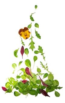 Fogli di insalata di lattuga verde isolati sul bianco