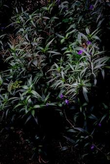 Foglie lunghe verdi con sfondo scuro di fiori viola