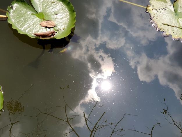 Foglia di loto verde nello stagno con un riflesso del sole e delle nuvole nel cielo blu