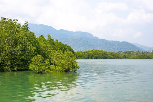 Mangrovie verdi piegate sul fiume ai tropici dell'asia sullo sfondo delle montagne