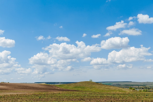 Prato verde sotto il cielo azzurro con nuvole. bellissima natura, paesaggio.