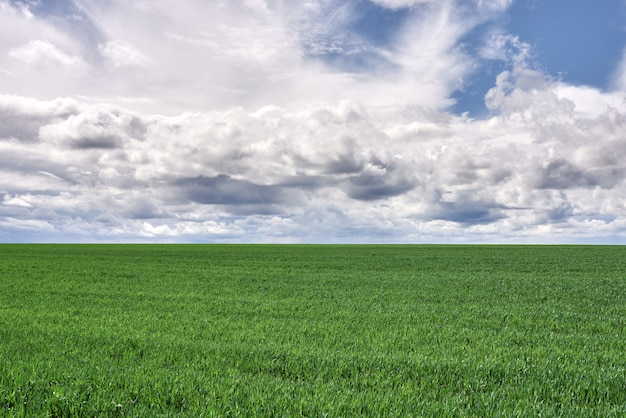 Prato e cielo blu verdi con le nuvole al tramonto
