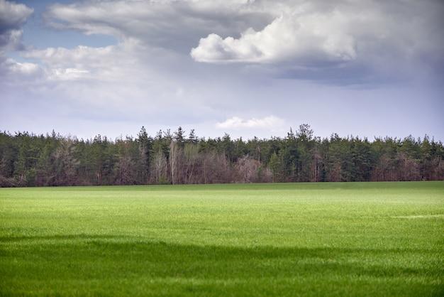 Prato e cielo blu verdi con la foresta