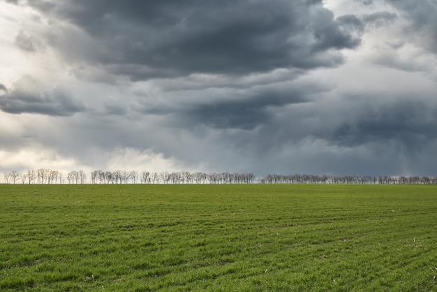 Prato e cielo blu verdi con gli alberi su un orizzonte