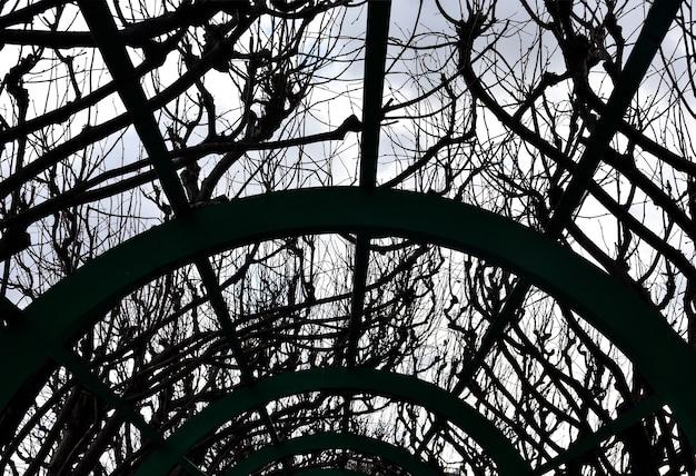Tunnel di metallo verde in giardino, struttura in metallo verde, tunnel da giardino
