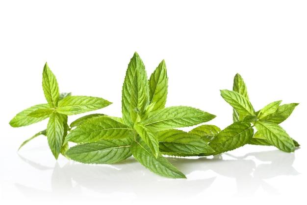 Menta verde isolata su bianco
