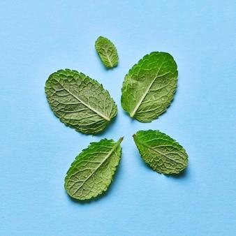 Foglie di menta verde liberamente posizionate con gocce d'acqua