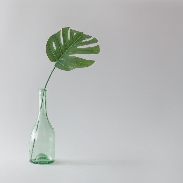 Foglia di monstera verde in bottiglia di vetro