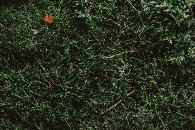 Sfondo di rami di muschio verde