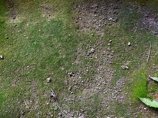 Muschio verde in pietra