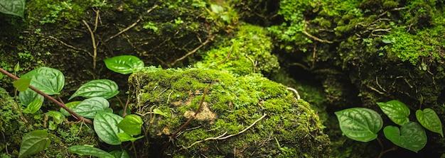 Muschio verde sugli alberi all'aperto