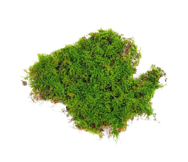 Muschio verde su bianco