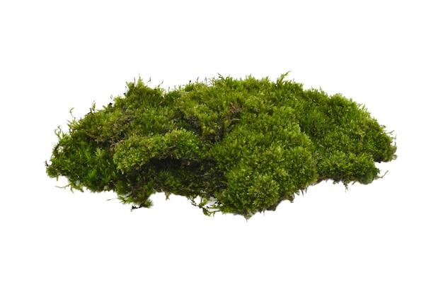 Muschio verde con erba isolato su sfondo bianco