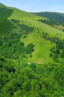Paesaggio montano verde con mucche e cavalli al pascolo sull'erba. santander.